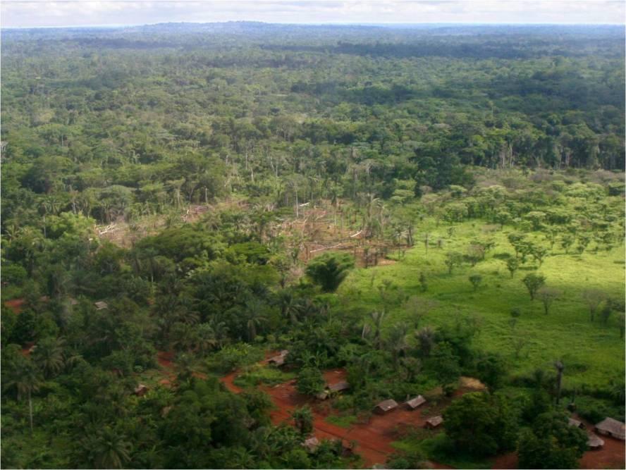 DR Congo's jungle terrain